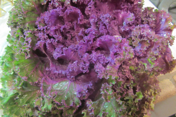 I have been drinking a lot of purple kale the last few months.