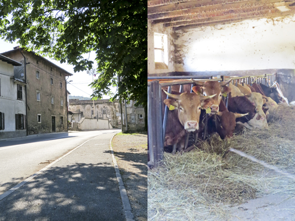 A shot of the street and the cows.