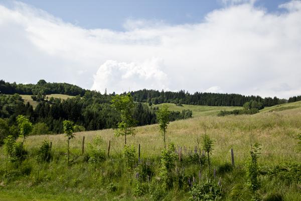Hills of Straßburg