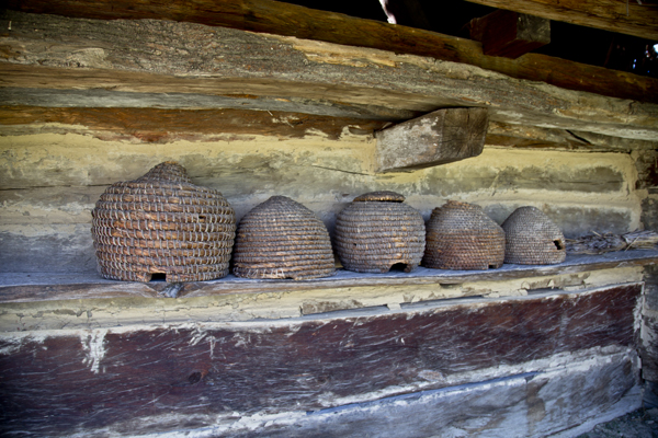 These bee hives were on display at a bee keeper's home.