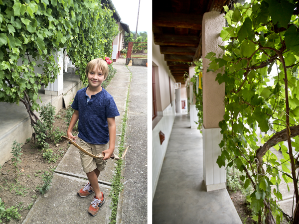 Big guy exploring Dédi's house and the grapevines along the rear peasant-style house.