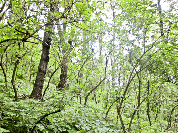 The forest canopy