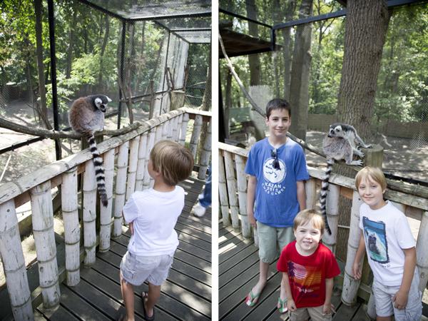 The boys meet a curious lemur.