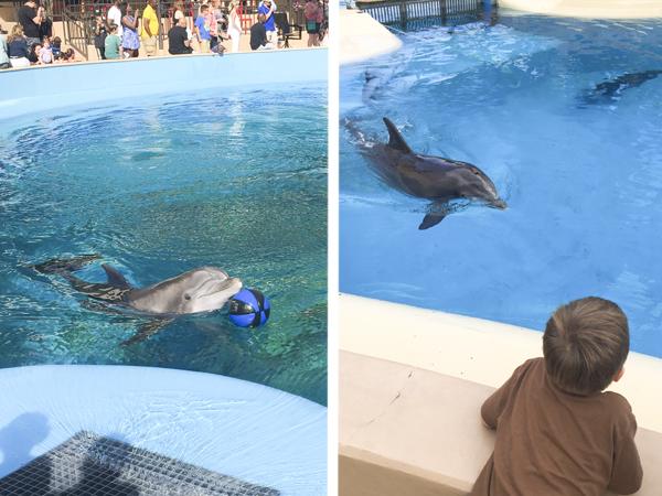 Enjoying the dolphin shows
