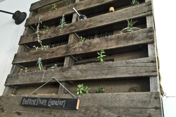 The succulent palate garden