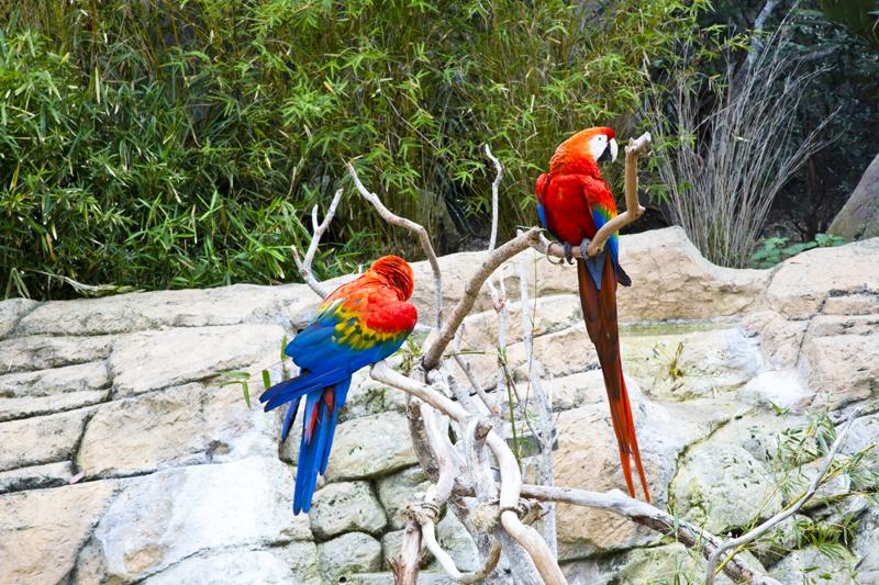 Santa Barbara Zoo 005 Scarlet Macaw