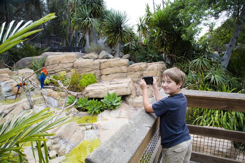 Santa Barbara Zoo 006 Scarlet Macaw