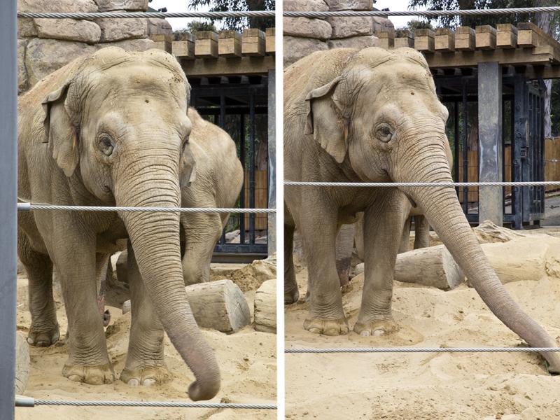 Santa Barbara Zoo 011 Asian Elephants